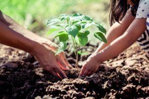 Crea un jardín sostenible con jardineras de madera