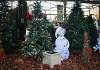 Maceteros para árboles de Navidad