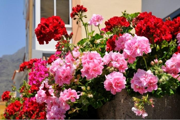 plantas para decorar la terraza